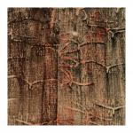 A.d.R. Käferspuren - Holzdruck auf Nessel - in Privatbesitz